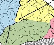 脳科学者が教える超シンプル共感覚習得法を教えます 記憶力を上げたい方、共感覚を身に着けて見たい方にオススメ!!