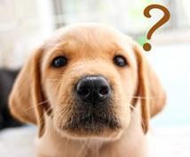 犬猫の健康・お悩み相談のります わんちゃん、ねこちゃんの困った!をご相談ください