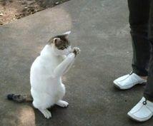 【ねこ・猫・ネコ】ねこ飼育の相談にのります!飼育暦20年オーバーです!アドバイスします