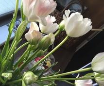 お花を買うときの、上手なショップへの伝え方教えます すお祝い事、ご法事 どのようなシーンでもお答えいたします