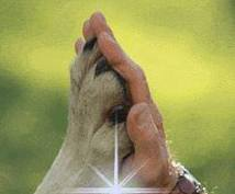 ペットさんの気持ちをお尋ねします 大切なペットさんの心の架け橋のお手伝いができたら嬉しいです