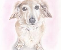 あなたの大切なペットの絵を描きます 色鉛筆で描かれた優しい絵をあなたの元へ