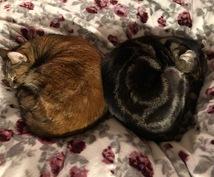 夫婦と猫4匹が、心身の痛み・アンバランスを癒します 体調不良・心のモヤモヤの本当の原因、あなたの体にお尋ねします