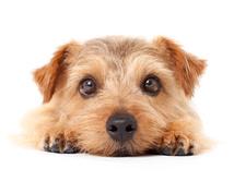 ペットと飼い主が幸運になる姓名判断&改名致します あなたのペット病弱じゃないですか?姓名判断&改名致します。