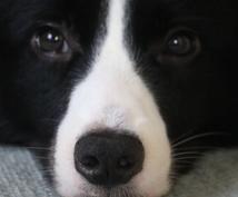 犬の飼い方・しつけについてカウンセリングを行います 初めて犬を飼う方・これから犬を飼う方のご相談お待ちしています
