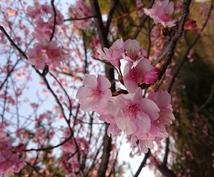 【心に光を】あなたの恋愛、仕事を応援!【エンジェルタロット&日本の神様カード】