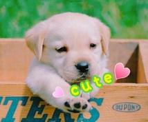 かわいいペットのお名前をお探しします 新しい家族になったペットの名前が決まらない!そんな方に…