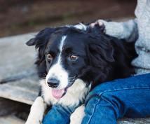 犬とドイツに旅行・赴任したい人の質問に回答します 2018年に日本とドイツを2往復した実体験!