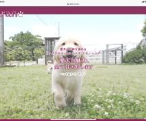愛犬の選び方をワンポイントアドバイスします 初めて犬を飼う方のために公認訓練士がお答えします!