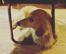 犬のしつけにお困りのかた、相談受けます ワンちゃんを飼う上で注意することしつけの時に注意すること
