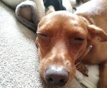 アニマルコミュニケーションでペットさんの声届けます 【シンプル版】想いを伝えたい、気持ちを知りたい飼い主さまへ。