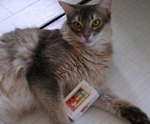幸運の白猫タロット 最適スプレッドで占います 本当に占いが必要な方のみご利用ください