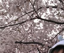 都内·関東近郊の桜·紅葉スポット教えます 穴場·おすすめの目的に合わせた場所を感想交えて紹介します