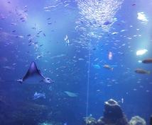 オススメの水族館教えます 休みの日にどこに行こうか迷っている方へ