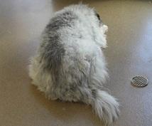 日本からオーストラリアに犬を連れて行く方法調べます オーストラリアへの犬の検疫手続きに困っている方へ