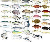初心者の方に魚の捌き方をお教えします お魚捌きに挑戦してみたい方(ビデオで同時進行)