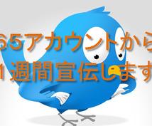 65個のツイッターアカウントから一週間宣伝します。