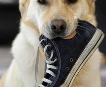 靴のオリジナルブランド作成したい方アドバイスします 自社のオリジナルブランドを作りたい方に