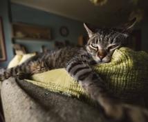 ネコも自分も暮らしやすいインテリアご提案します ※ネコと一緒に暮らしたい方!ご相談下さい♪