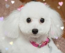 愛犬のトリミングについてのお悩みにお答えします トリマー歴15年、様々なわんちゃんと関わってきました!