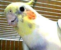 インコ、猛禽類の飼い方、育て方についてお答えします