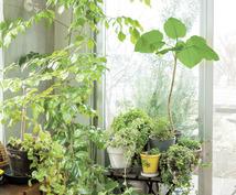 植物の育成の相談にのります 好きな植物で暮らしを豊かにしよう!