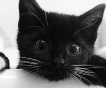 ペットの言葉を聞きます 黒猫ハルの「霊能力でペットの声を聞きます」ニャ