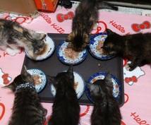 猫の里親募集のコツをアドバイスします 初めて猫の里親募集をする方に、必ず役に立つハウツーを伝授!