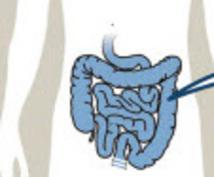 お腹のお悩みに腸活カスタマイズケアアドバイスします 気になる便秘、ぽっこりお腹や腸トラブルなど腸活中の方へ