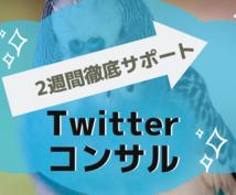 2週間Twitterコンサルします いいね・RT・質問し放題で短期集中で実力アップ!