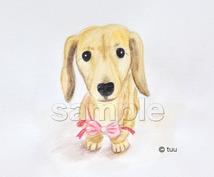 ペットの似顔絵を水彩色鉛筆で描きます 記念やプレゼントにもオススメ!