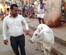 インド旅行のアドバイスをします!ガンジス川、カレー、下痢、タージマハル、牛、アーユルヴェーダ…