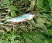 釣りを始めたい人、もっと釣りたい人へお勧めします 基本に立ち返った「釣れるヒント」を納得するまで提供します。