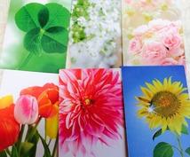 婚期お伝えします!お得な数秘&オラクルカード&お花のカードを使った総合リーディング!