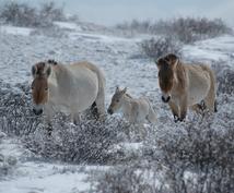 冬でも楽しめるモンゴル旅行、お教えします ご希望に応じて、 航空券・ホテルの予約、旅行手配もできます。