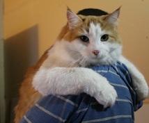 海外から日本に猫を輸入する書類手続きの質問答えます 海外からペットの猫ちゃんを日本に連れて帰るという方に