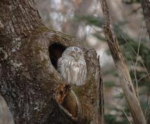 北海道の野生動物・鳥の撮影など相談にのります 今話題のシマエナガやエゾモモンガの撮影してみたいあなたへ
