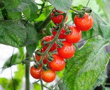 植物に関するお悩み事アドバイス致します 今年から野菜育てたい!ガーデニング初心者の方にアドバイス!