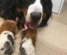 現役獣医師が動物病院の全てをお話します 先生に直接聞けないこと何でも教えます!