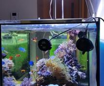 熱帯魚を飼育している際のトラブルやお悩みに業界のプロが経験、知識を踏まえて相談に乗ります!