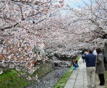 【もうすぐ桜咲く春☆京都へ旅したい方へ♪】京都1人旅歴約8年☆楽しみたいテーマ毎のオススメ教えます