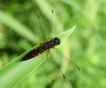 虫に関するあらゆる相談請け負います 虫に詳しくない人が虫で困ったときにぜひ!