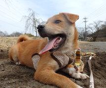 初めて犬を迎える前に知りたいこと教えます どこに聞いたらいいかわからない、飼う前の疑問と不安にお答え!