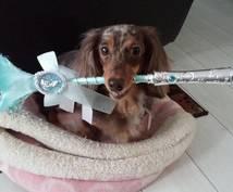 愛犬のしつけでお悩みでしたらアドバイスします 愛犬のしつけにお悩みではありませんか?