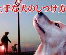犬のしつけ方法!無駄吠えやトイレを覚え手ね!ます あなたの犬にもきっと当てはまる一般的な犬の問題行動。