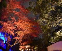 秋の京都観光!教えます 紅葉名所が多数の京都、地元民ならではの選りすぐりの名所紹介!