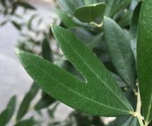 植物の癒しの力をタロットリーディングに添えてお届けします
