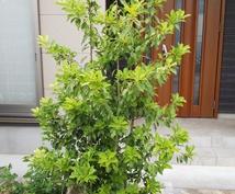 私が自分なりに良いと思う植木を伝えます 植木、グランドカバーが好きで、自分で植木を植えようと思う方