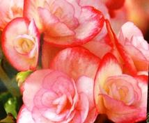 あなただけの恋愛運アップするお花をお知らせします ♡恋するあなたにお花からのメッセージつき