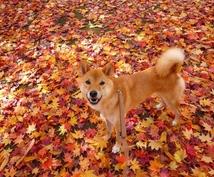 犬との散歩を利用して痩せる3つのポイント教えます 13,8kg痩せた私が実践していた方法をあなたに教えます